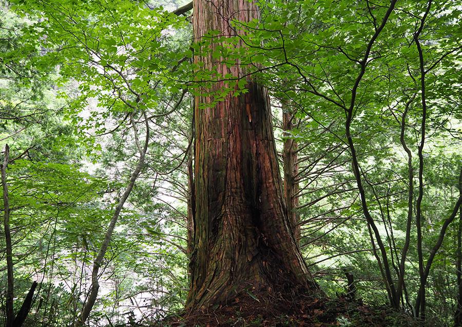 011 Higashi Shirakawa-mura & Kashimo, Gifu