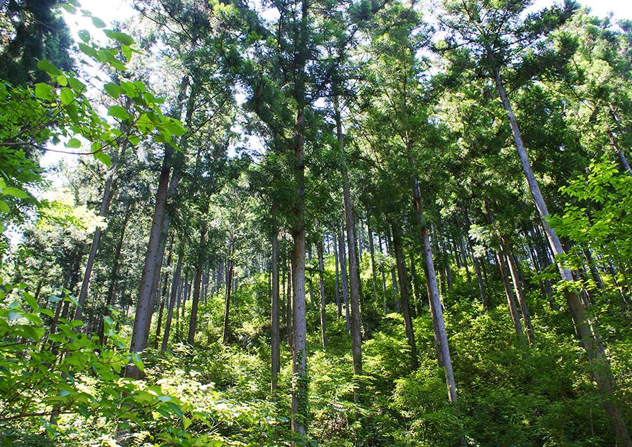 002 Nakatosa-cho, Kochi