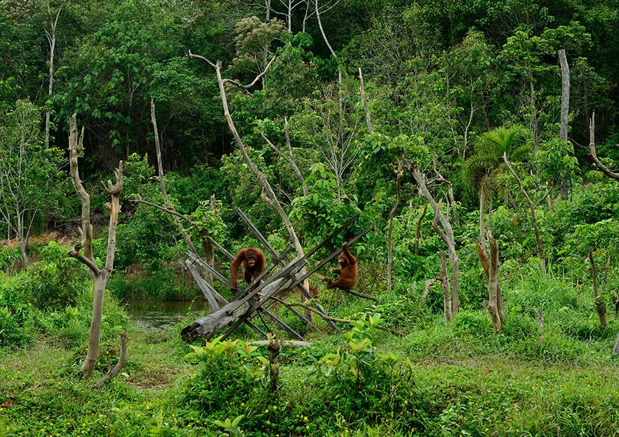 013 インドネシア 東カリマンタン州