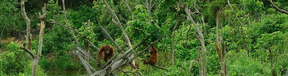 インドネシア 東カリマンタン州